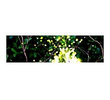 Treelight Photographic Print