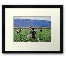 Bean Pickers Framed Print