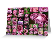 50 Angel Face Roses Greeting Card
