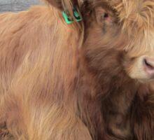 Moose  15 March 2015 Sticker