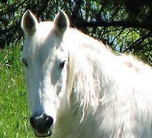 Shaggy horse by Karen Doidge