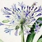 Agapanthus head - detail by Denise Martin