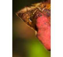 an insects world Photographic Print