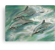 Dolphin trio  Canvas Print