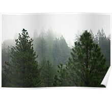 Pine trees in the fog Poster