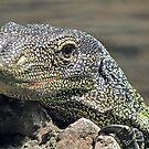 I'm a Lizard by MichelleR