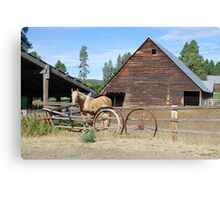 Horse by the barn Canvas Print