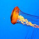 Jellyfish by Darlene Lankford Honeycutt