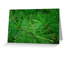 Evergreen  ^ Greeting Card