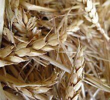 Wheaten Hay by Rosie Terry