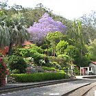 Spring Bluff featuring a beautifully flowering Jacaranda tree. Qld. Australia by Marilyn Baldey