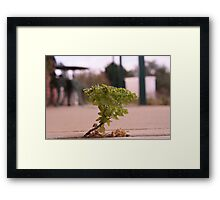 Concrete greenery Framed Print
