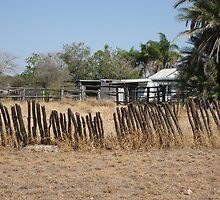 Really old fence in outback Qld. Australia by Marilyn Baldey