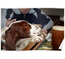 An Irish Red and White Setter at the Bar of a Public house  Poster