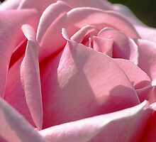 Rose Pink by Sharon House