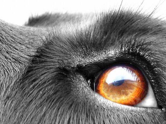 Eye See You by Honor Kyne
