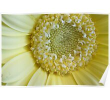 Pale yellow beauty Poster
