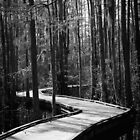 Boardwalk at Woods Bay State Park by AlixCollins