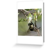 BumbleBee on White Flowers Greeting Card
