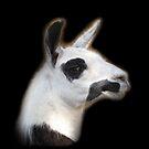 The Llama ll by MichelleR