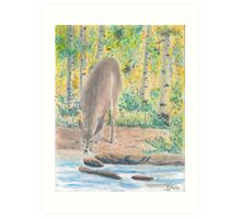 Deer Quenching Thirst - Oil Pastels Art Print