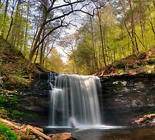 Greening Trees at Harrison Wright Falls by Gene Walls