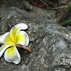 A Fallen Flower at Wat Pho by MeBoRe