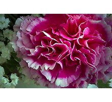 Pink Curles Photographic Print