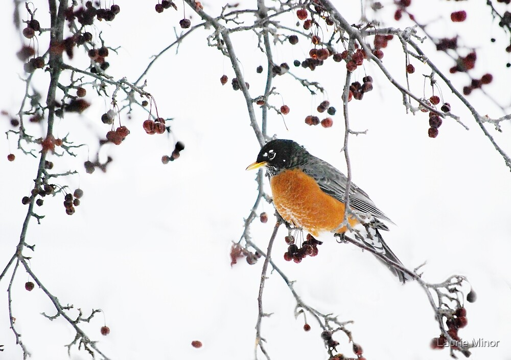 Robin In Winter by Laurie Minor