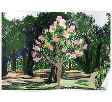 Crepe Myrtle tree  Poster