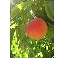 Peach Photographic Print