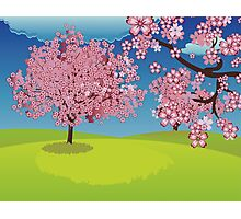 Blooming Sakura Tree on Lawn Photographic Print