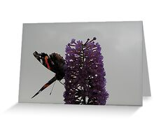 Red Admiral - No.3 Greeting Card