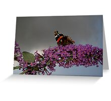 Red Admiral - No.1 Greeting Card