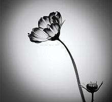 neslihan öncel 014 by Neslihan Öncel