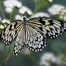 Flutterby by Isabelle Lafrance