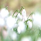 Through the Softness by TriciaDanby