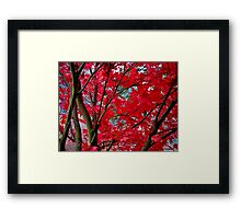 crimson fall Framed Print