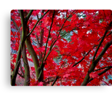 crimson fall Canvas Print