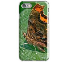Comma Butterfly ( Polygonia c-album) (III) iPhone Case/Skin