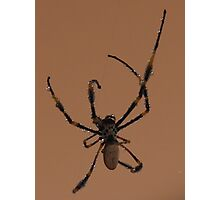 Uninvited guest Photographic Print