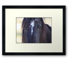 Horse Hair Framed Print