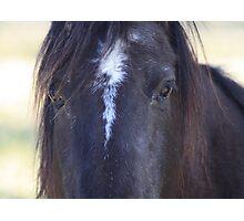 Horse Hair Photographic Print