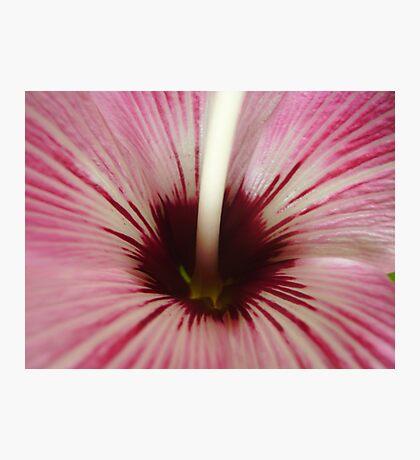 Macro! Photographic Print