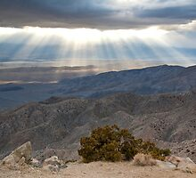 Mojave Desert Sunset by Nickolay Stanev