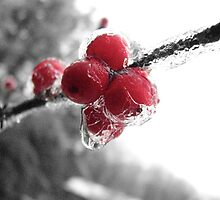 Winter Berries on Ice by 08amd26