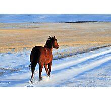 Snow Boogie Photographic Print