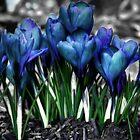 Spring Rebirth by Shelley Neff