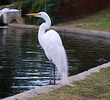 Pure White by saseoche