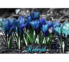 Spring Rebirth - Text Photographic Print